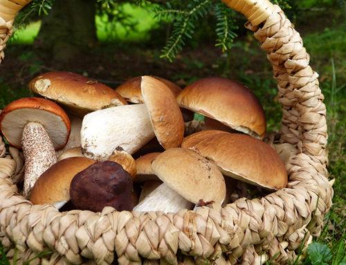 come essiccare i funghi